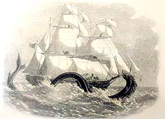 Image of a sea serpent that allegedly attacked a sailing vessel, the British Banner on April 25, 1859.