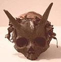 Horned giant skull?